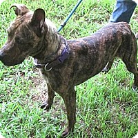 Plott Hound Mix Dog for adoption in Tahlequah, Oklahoma - Princess