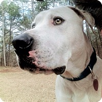 Adopt A Pet :: Barkley 💚 DOB 1/2015! - Allentown, PA