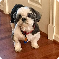 Adopt A Pet :: Willow:adoption pending! - Madison, WI