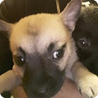 Adopt A Pet :: Nellie - Thousand Oaks, CA