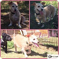 Adopt A Pet :: Zookie - DeForest, WI