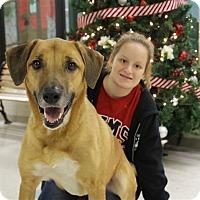 Adopt A Pet :: Tyson-Prison Graduate - Elyria, OH
