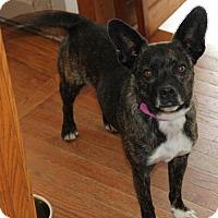 Adopt A Pet :: SUZI-Q - Jackson, NJ