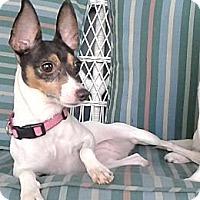 Adopt A Pet :: Judith - Jacksonville, FL