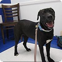 Adopt A Pet :: Macy - Alexandria, VA