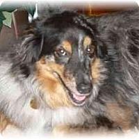 Adopt A Pet :: Blue - Orlando, FL