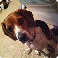 Adopt A Pet :: Princess Grace - Phoenix, AZ