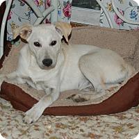 Adopt A Pet :: Cindi - Hazard, KY