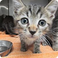 Adopt A Pet :: Pocus - Athens, GA