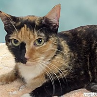 Adopt A Pet :: Patches - Westchester, CA