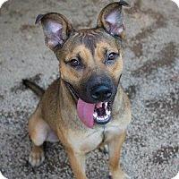 Adopt A Pet :: Sarah Ribbions - Decatur, GA