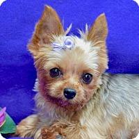 Adopt A Pet :: Moshi - Irvine, CA