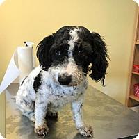 Adopt A Pet :: Yoko - Chico, CA