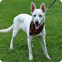 Adopt A Pet :: Sugar - Mt. Airy, MD