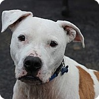 Adopt A Pet :: Roscoe - Port Washington, NY