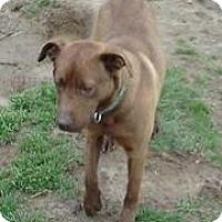 Adopt A Pet :: Chip - Medora, IN