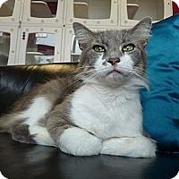 Adopt A Pet :: SAMSON - Madison, AL