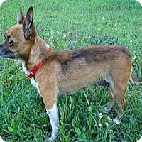 Adopt A Pet :: AMIE - ROCKMART, GA
