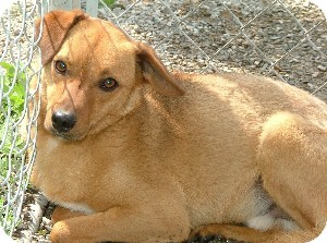 Terrier (Unknown Type, Small) Mix Dog for adoption in Savannah, Missouri - Caleb