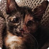 Adopt A Pet :: Molly - Victor, NY
