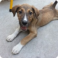 Adopt A Pet :: Holly*ADOPTED!* - Chicago, IL
