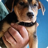 Adopt A Pet :: Bucaneer - Gainesville, FL
