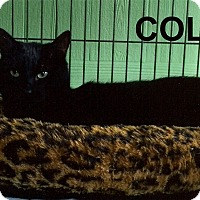 Adopt A Pet :: Cole - Medway, MA