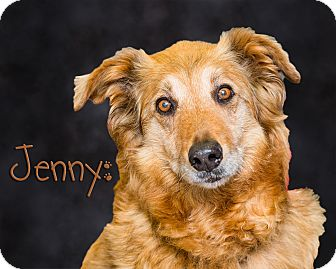 Collie Mix Dog for adoption in Somerset, Pennsylvania - Jenny