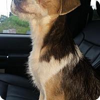 Adopt A Pet :: Daisey-6 Pounds - Washington DC, DC