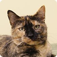 Adopt A Pet :: Maggie - Dundee, MI