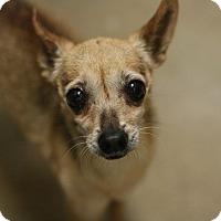 Adopt A Pet :: Roxy - Canoga Park, CA