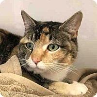 Adopt A Pet :: Bo-Peep - Fairfax, VA