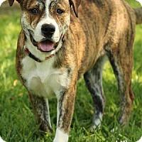 Adopt A Pet :: SURI - Tomball, TX