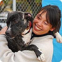 Adopt A Pet :: Eva - Reisterstown, MD