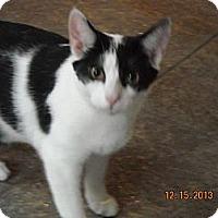 Adopt A Pet :: Eddison - Riverside, RI
