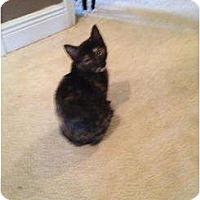 Adopt A Pet :: Baby Tortie - Mobile, AL