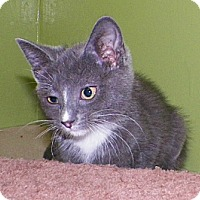 Adopt A Pet :: Cloudy - Dover, OH