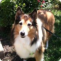 Adopt A Pet :: Lady Di - Abingdon, MD