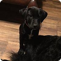 Adopt A Pet :: Dana - Groton, MA