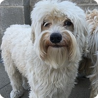 Adopt A Pet :: Sadie - Van Nuys, CA