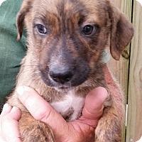 Adopt A Pet :: Girlie - Gainesville, FL