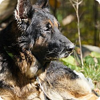 Adopt A Pet :: Kaiser - Wayland, MA