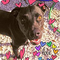 Adopt A Pet :: Star - Miami, FL