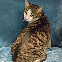 Adopt A Pet :: Curly - Morgantown, WV