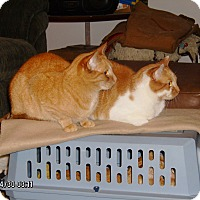 Adopt A Pet :: Lammie (COURTESY POST) - Baltimore, MD