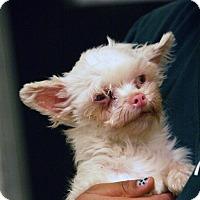 Adopt A Pet :: Aurora - Palmdale, CA