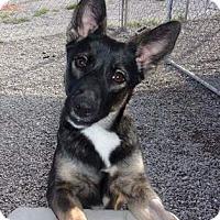 Adopt A Pet :: Tanya - Jamestown, TN