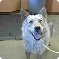 Adopt A Pet :: *MERLIN - Sacramento, CA
