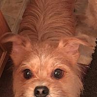 Adopt A Pet :: Skipper - PLAINFIELD, IN