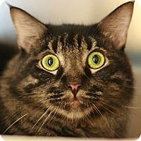 Adopt A Pet :: Friskie - Canoga Park, CA